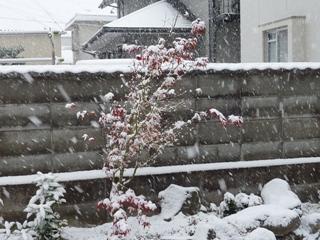 紅葉と積雪