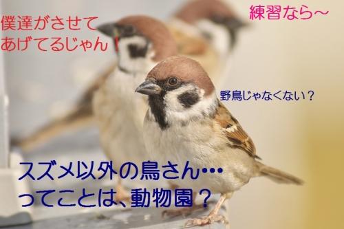 020_20141201211046403.jpg