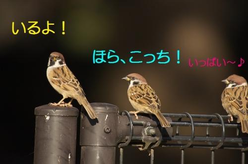 020_20141203210617796.jpg