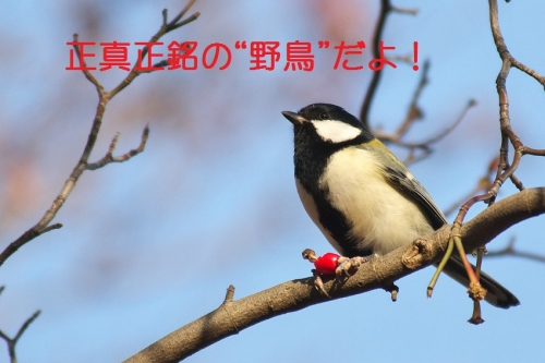 030_20141201211051836.jpg