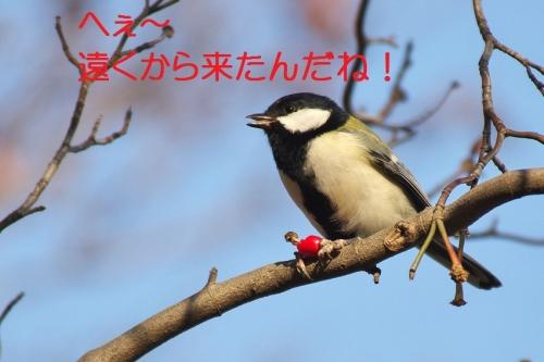 040_2014120121105081a.jpg