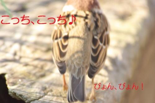 040_20141222215947d19.jpg