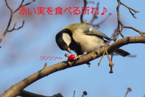 050_201412012110514d5.jpg