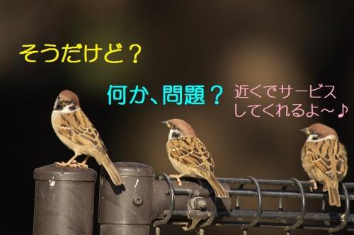 060_20141203210620f98.jpg