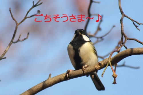 070_20141201211202945.jpg