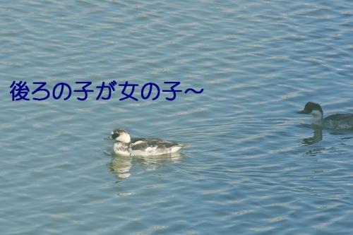 070_201412222200250a4.jpg
