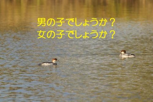 090_20141222220029c71.jpg