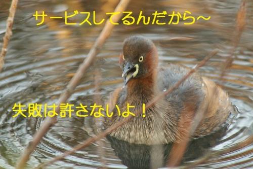 100_20141201211209efa.jpg