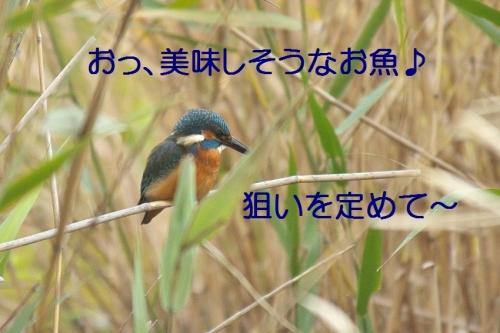 100_20141202182809fb3.jpg