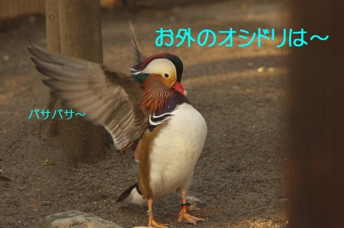 100_20141203210712e07.jpg