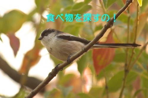 110_20141214195911f93.jpg