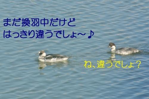 120_20141222220346879.jpg