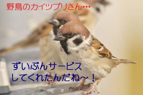 130_20141201211249ce6.jpg