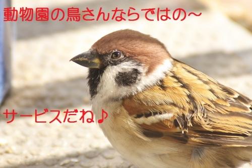 130_201412032108179f2.jpg