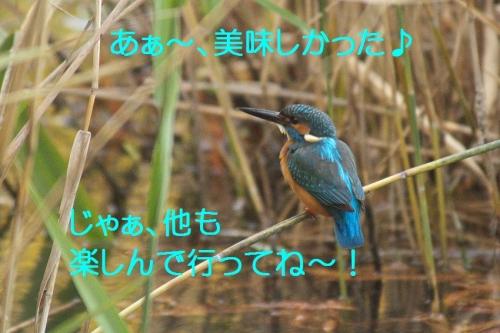 140_20141202182816a8b.jpg