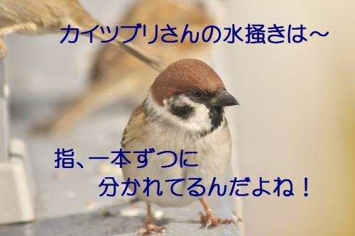150_20141201211252a29.jpg