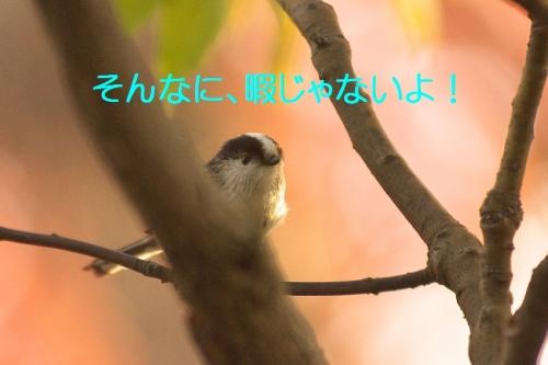 150_20141214195918d1d.jpg