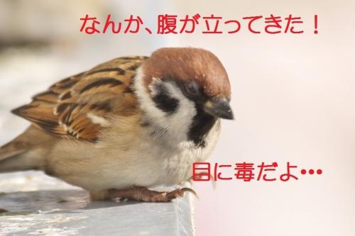 150_201412242112518ed.jpg