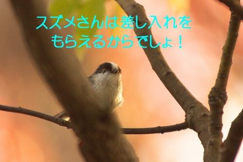 160_2014121420002678f.jpg