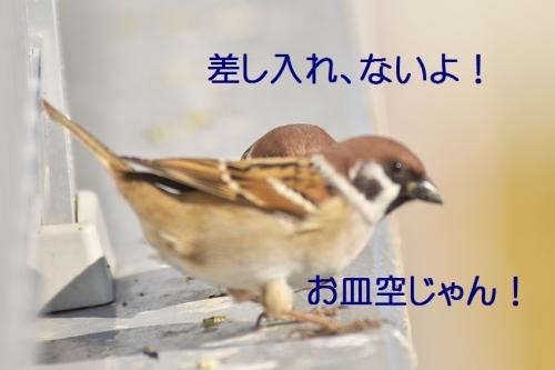 170_20141214200028fc8.jpg