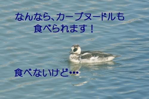 170_2014122222035136b.jpg