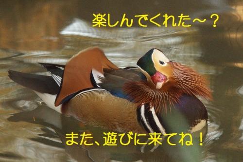 190_20141203210925d2e.jpg