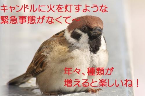 190_201412242128061c6.jpg