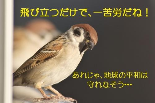 200_20141222220451b4e.jpg