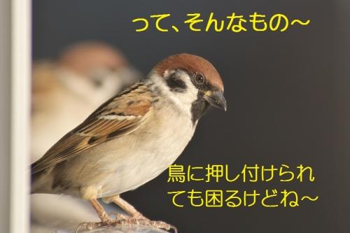 210_2014122222045167f.jpg