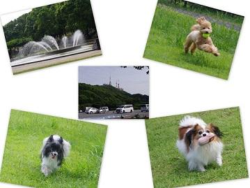 2014-09-13 水辺の森・稲佐山3