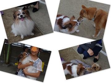 2014-10-05 おおさきドッグラン5