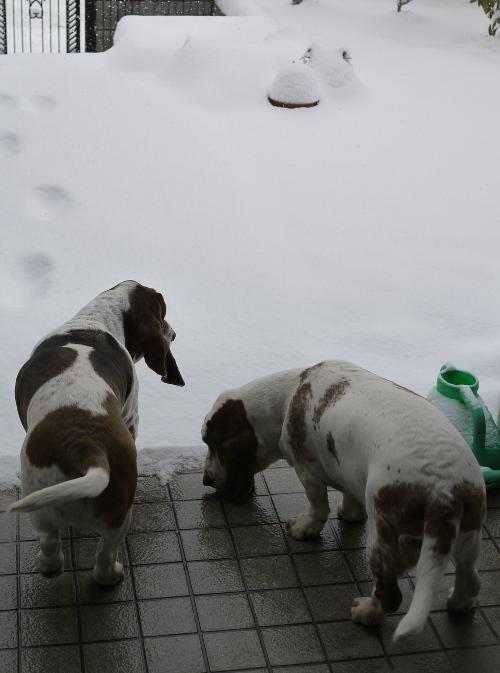 140214大雪午前中00006