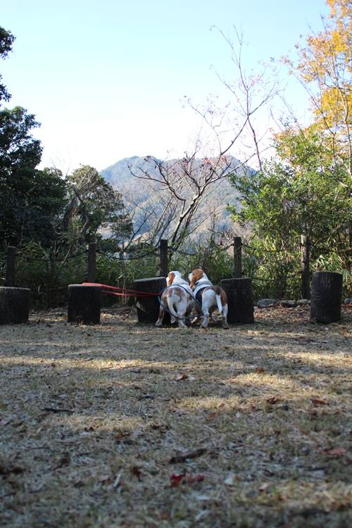 三重県民の森00006