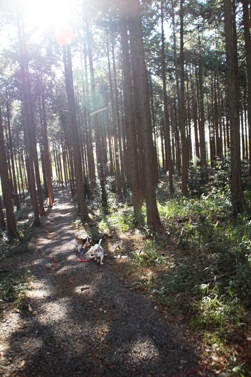 三重県民の森00007