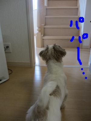IMG_1521.jpg