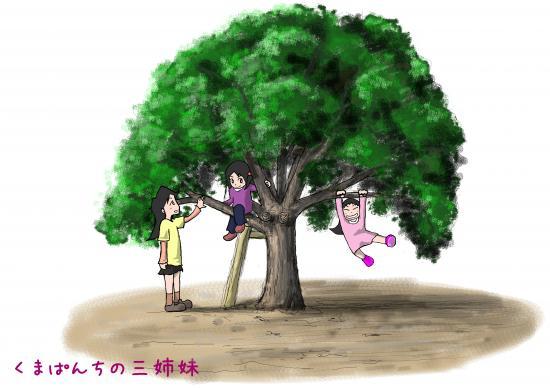 3simai_kinobori2_convert_20131119011305.jpg