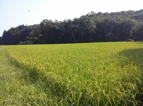 農作物成分の常識を変えた!『ピロール農法』現地調査に行ってきました⑤