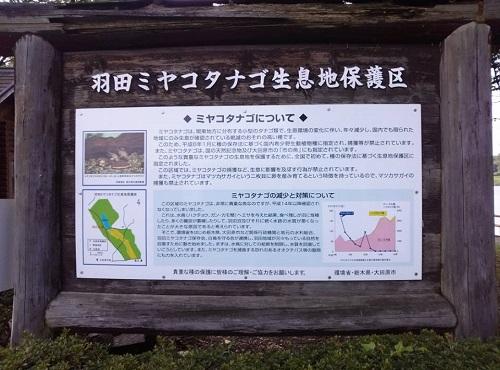 <羽田沼野鳥公園>に、寄り道③