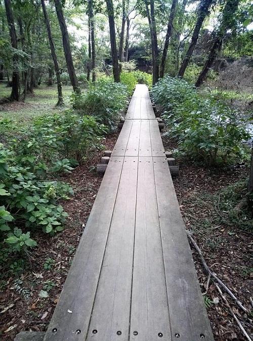 <磯川緑地公園>ちょいと散策⑧