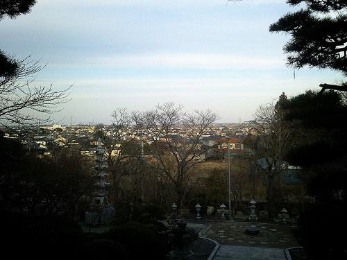 稱名寺の『シイノキ』~趣深き名木・名刹~<RT>③