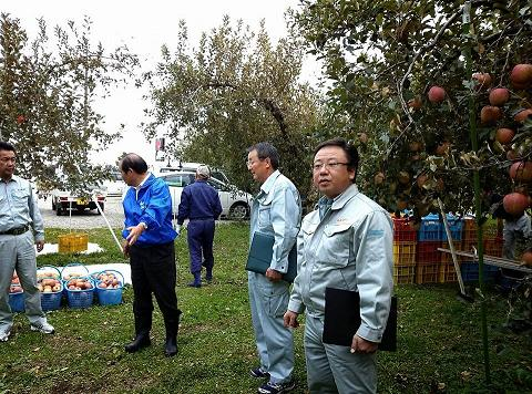 20131018【画像】リンゴ被害状況調査<矢板市>04_1