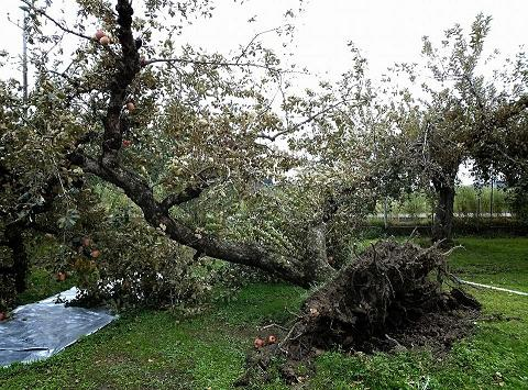 20131018【画像】リンゴ被害状況調査<矢板市>05_1