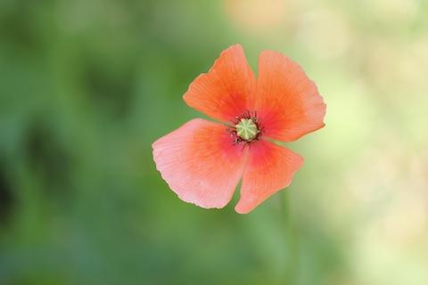 orengeflower.jpg