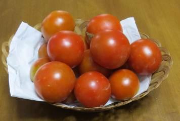 中球トマト