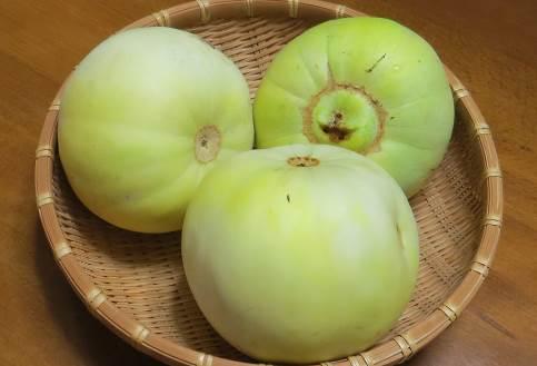 プリンスメロン収穫物