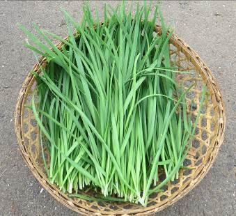 ニラ収穫物