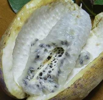アケビの白く甘い実