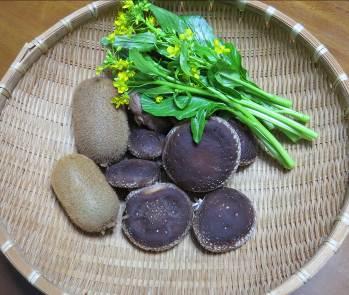 シイタケ収穫物