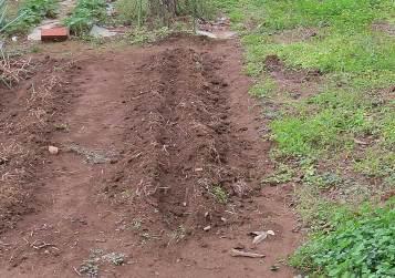 不耕起の畝作り