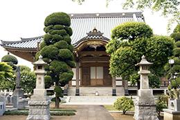 130504東京 梅岩寺の欅⑥